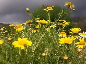 Aktuelle Blumen Im April : gelbe blumen am stra enrand foto bild pflanzen pilze flechten bl ten kleinpflanzen ~ Markanthonyermac.com Haus und Dekorationen