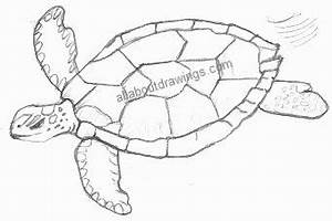 Turtle Drawing Outline