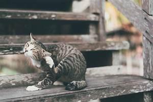 Flöhe Bei Katzen Bekämpfen : parasiten bei katzen zecken und fl he entfernen zooplus ~ Orissabook.com Haus und Dekorationen