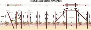 Weinspalier Freistehend Bauanleitung : spalier lexikonartikel wineembassy 39 s blog ~ A.2002-acura-tl-radio.info Haus und Dekorationen