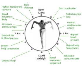 Human Circadian Rhythm Biological Clock