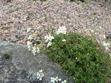 Online Flower Garden