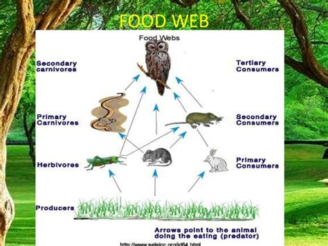 cuisine web forest ecosystem food chain foodfash co