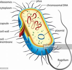 Prokaryote Stock Illustrations And Cartoons | Getty Images