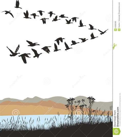 migrating wild geese  autumn landscape stock vector