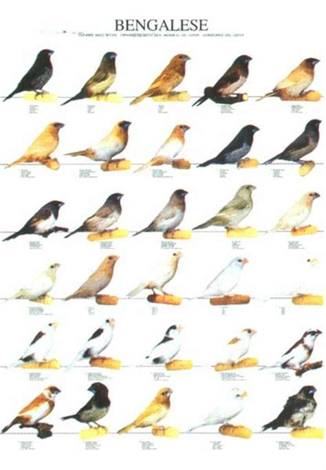 best 28 types of finches different types different