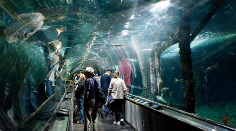aquarium of the bay in san francisco peek