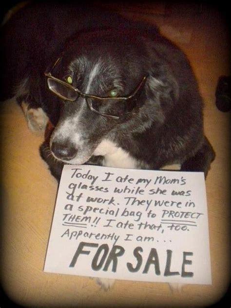 funny pet shaming  pics vitamin ha animal shaming