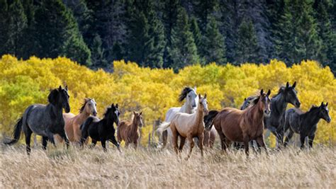 group  horses  image hd wallpapers