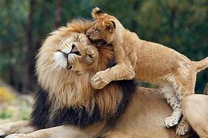 Photos, Of, Animals, That, Show, You, How, Hugging, Can, Improve, Your, Day