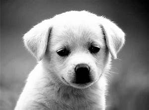 funny puppy dog black and white pictures
