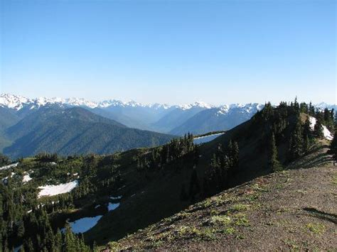 Hurricane Ridge Olympic National Park 2019 All You