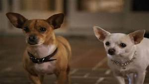 Beverly Hills Chihuahua 2 | Disney Video