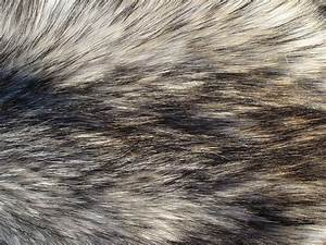 Fur Texture 15 by Fox-N-Wolf on DeviantArt