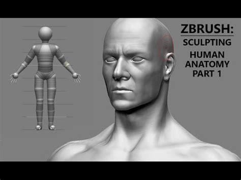 zbrush character sculpting human anatomy part  base