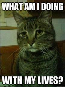 Depressed Cat Meme
