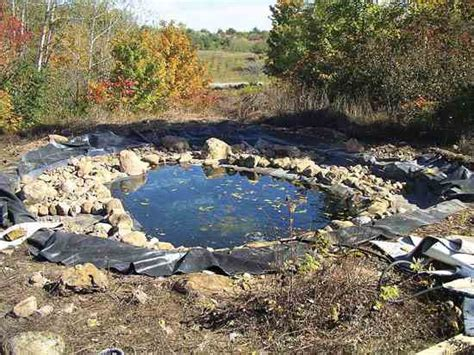 Clean Backyard Pond by Diy Backyard Pond Diy Earth News