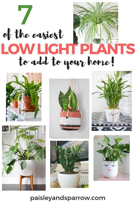 Pflanzen Die Nicht Viel Licht Brauchen by 7 Leichte Pflanzen Die Nicht Viel Licht Brauchen