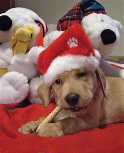 Funny wallpapers|HD wallpapers: cute christmas puppies
