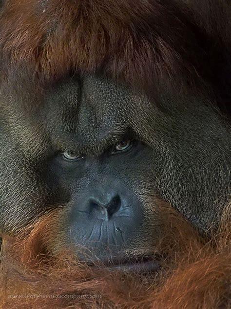 ugly monkey indianapolis
