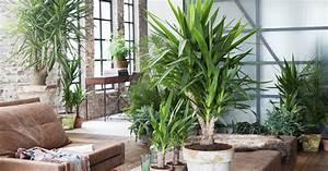 Pflanzen Für Schlafzimmer : gro e zimmerpflanzen mein sch ner garten ~ Eleganceandgraceweddings.com Haus und Dekorationen