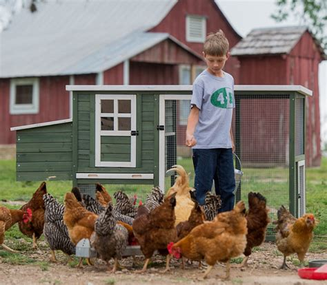 Caring For Chickens In Backyard by 8 Common Myths About Raising Backyard Poultry Tractor