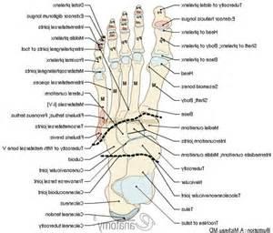 Human Foot Anatomy Bones Diagram