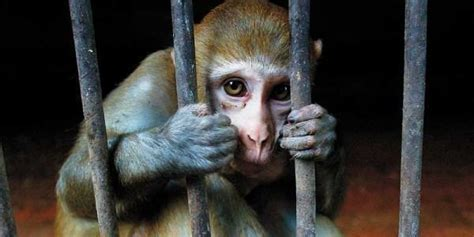 petition stop plans  construction   animal