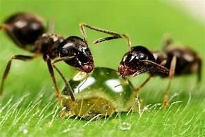Ameisen Bekämpfen Im Garten : ameisen bek mpfen im haus und im garten hausmittel gegen ameisen haushalt pinterest home ~ Frokenaadalensverden.com Haus und Dekorationen