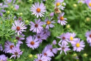 Late Summer Perennial Flowers