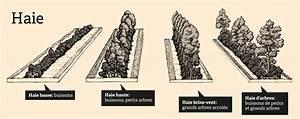 Quand Tailler Les Arbustes De Haies : quand tailler les arbustes de haies exceptional quand ~ Dode.kayakingforconservation.com Idées de Décoration