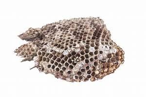 Wespennest Entfernen Vermieter : wespennest weg machen cheap wespennest deutsche wespe foto with wespennest weg machen wespen ~ Orissabook.com Haus und Dekorationen