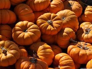 Autumn Pumpkin Wallpaper | wallpaper, wallpaper hd ...
