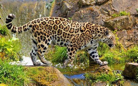 jaguar photo - HD Desktop Wallpapers   4k HD