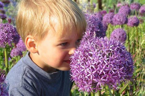 Kinderfreundliche Pflanzen Im Garten
