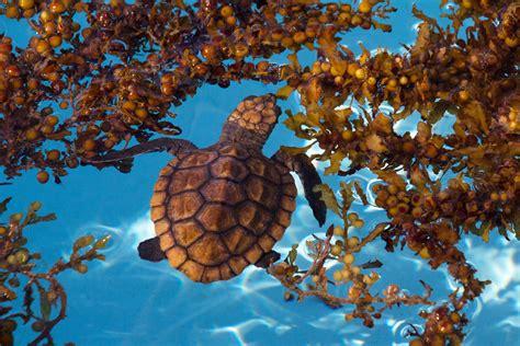 Loggerhead Sea Turtle Hospital
