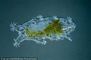 Tiny 'water bears' STEAL DNA from other species | Daily ...