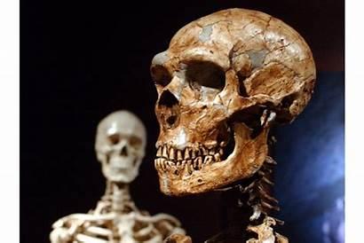 Neanderthal Dna Humans Don Why Human Csmonitor
