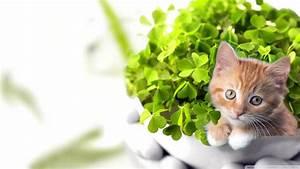 Cute Cat wallpaper - 1114346