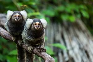 13 Different Types Of Monkeys From Around The World