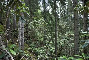 Ecology Of The Colchic Temperate Rainforest