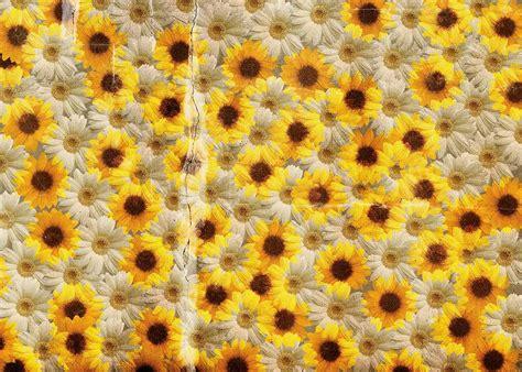 I fiori bianchi sono l'emblema della classe e dell'eleganza per antonomasia, e non è, infatti, un caso che sono proprio essi i protagonisti delle celebrazioni e fiori bianchi: Carta da parati con fiori bianchi e gialli. Yellow and white flowers. Wallpaper, wallcovering ...