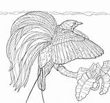 Paradise Coloring Bird Pages Drawing Birds Getdrawings Printable Getcolorings sketch template
