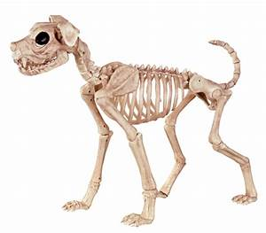 Lightweight Big Dog Halloween Skeleton – Dapper Cadaver Props