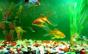aquariums images aquarium wallpaper hd wallpaper and background photos 40193624