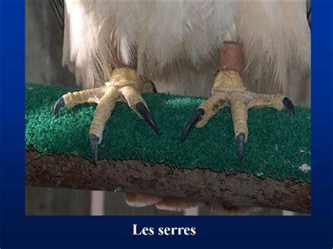 Serre Oiseau by Rehabilitation Biologie Generale
