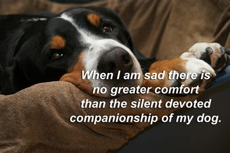 famous pet quotes  sayings cute status  animals