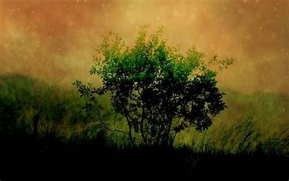 Canvas Background Grass Drawing Shade Wood Wallpapers