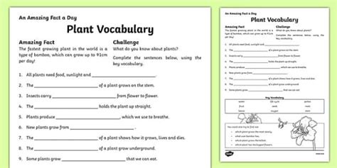 Plant Vocabulary Worksheet  Activity Sheet, Worksheet