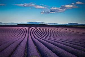 Wer Entfernt Wespennester : lavendel sorten winterhart welcher lavendel ist winterhart die 5 besten sorten lavendel ~ Frokenaadalensverden.com Haus und Dekorationen